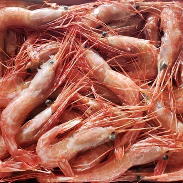 Fresh BC Sidestripe Shrimp - Tanya-Ray FIshing
