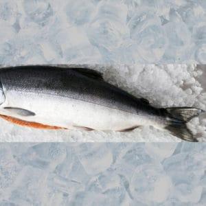 Fresh Whole Wild BC Salmon - Tanya-Ray Fishing